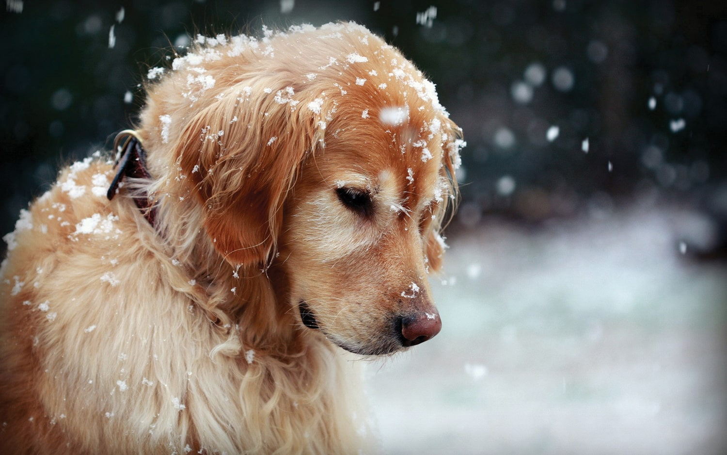 The 6 deadliest dangers for your pet this Winter