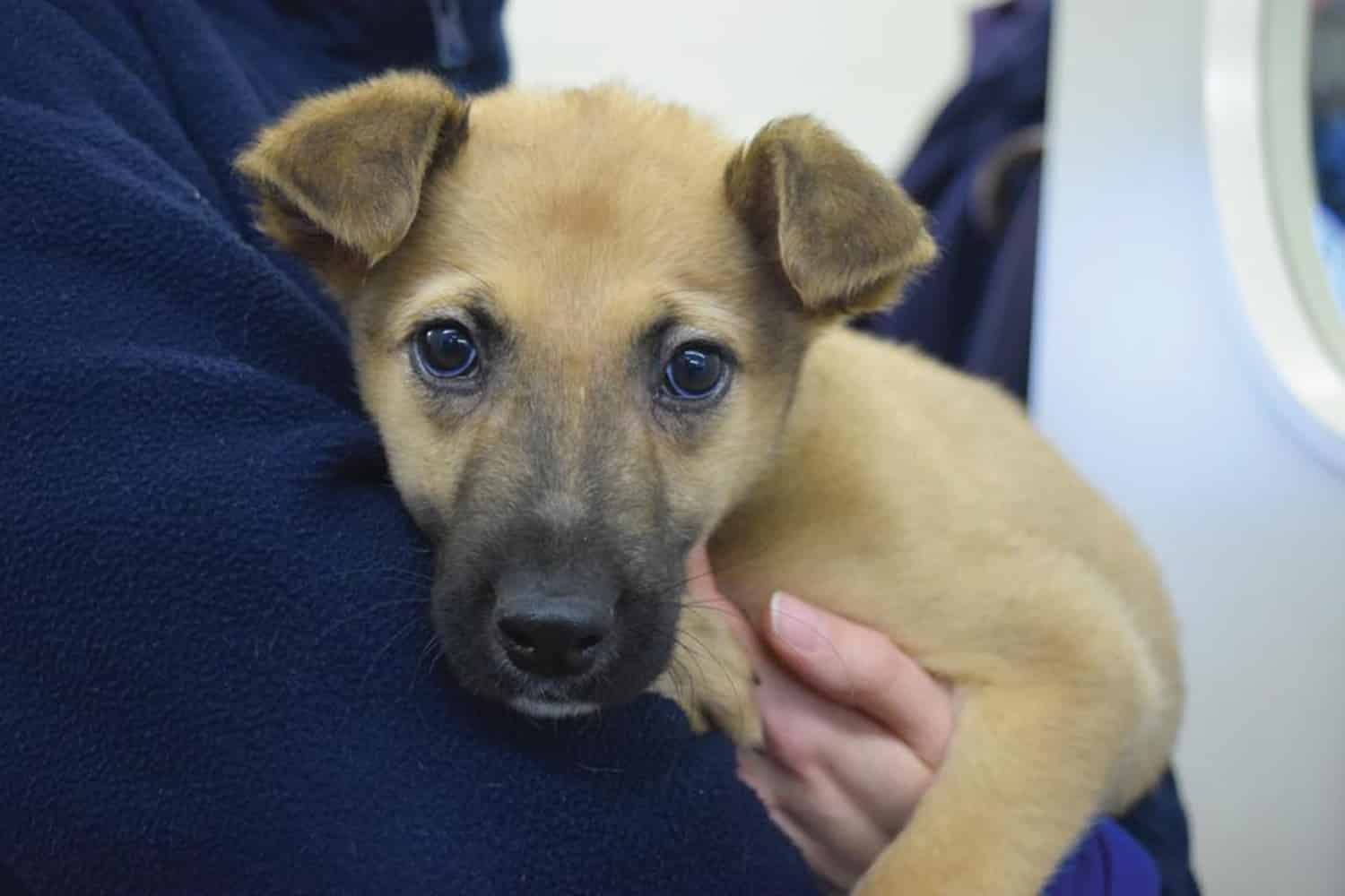 RESCUE CENTRE'S PLEA Battersea Dogs and Cats Home flooded with unwanted pets bought as Christmas presents from social media