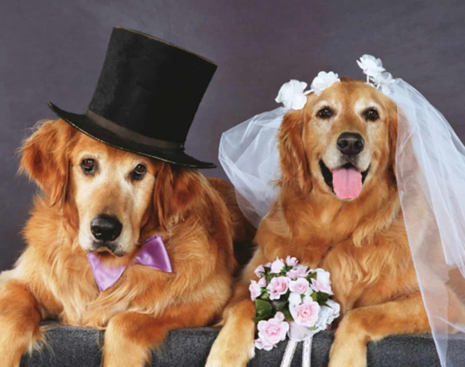 doggy wedding