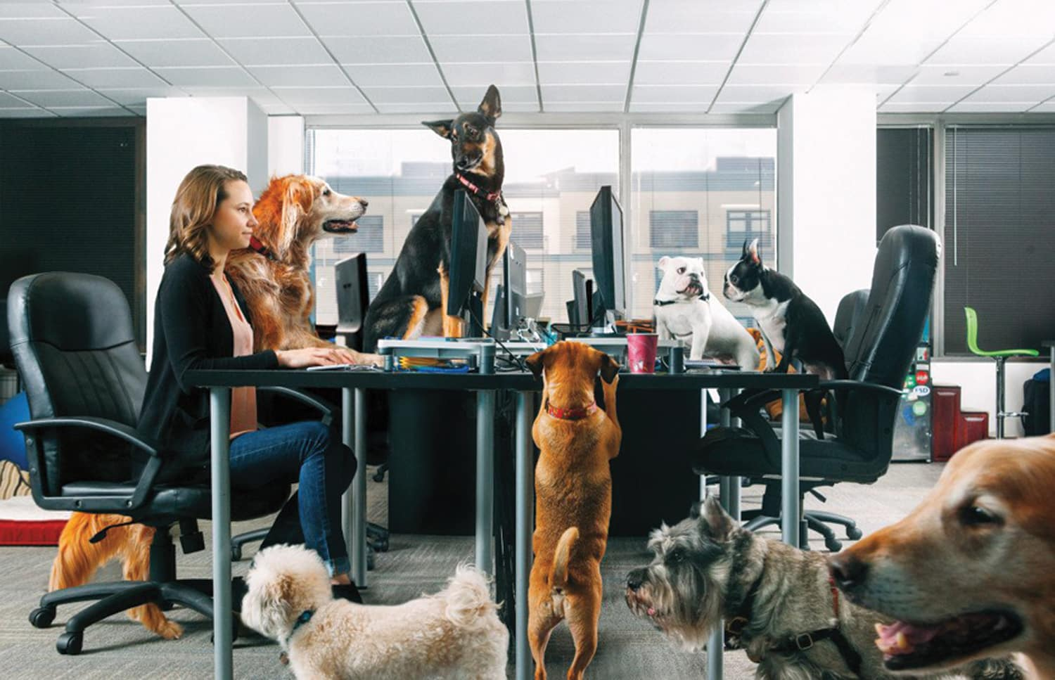 dog-friendly offices