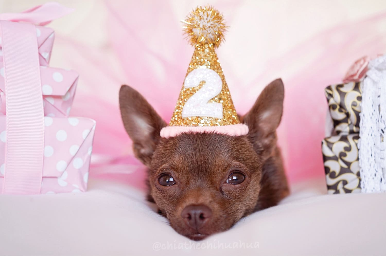 Puppy party! How to give your dog the best Birthday party ever