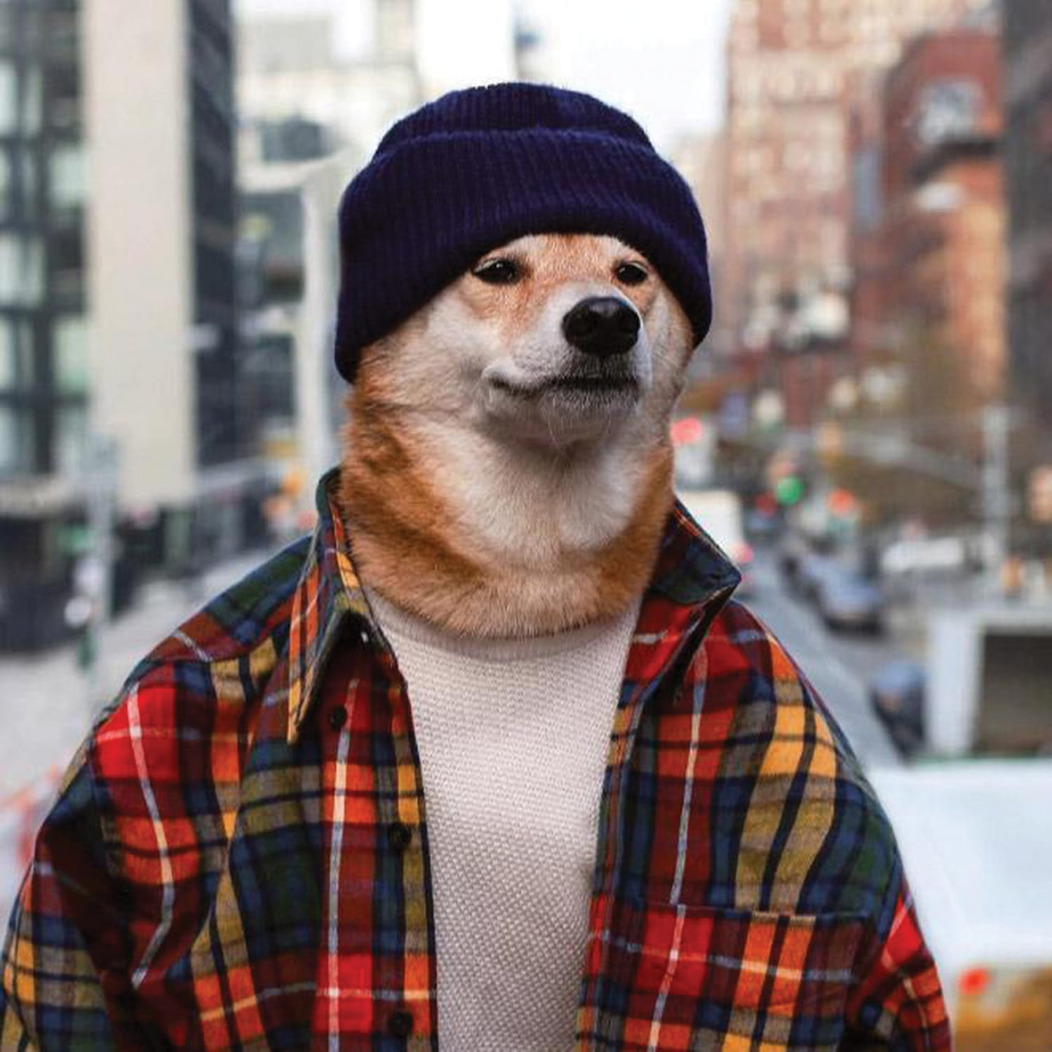 PUP IDOL: Japanese style guru who earns £140k a year and has his own clothing line – is a dog