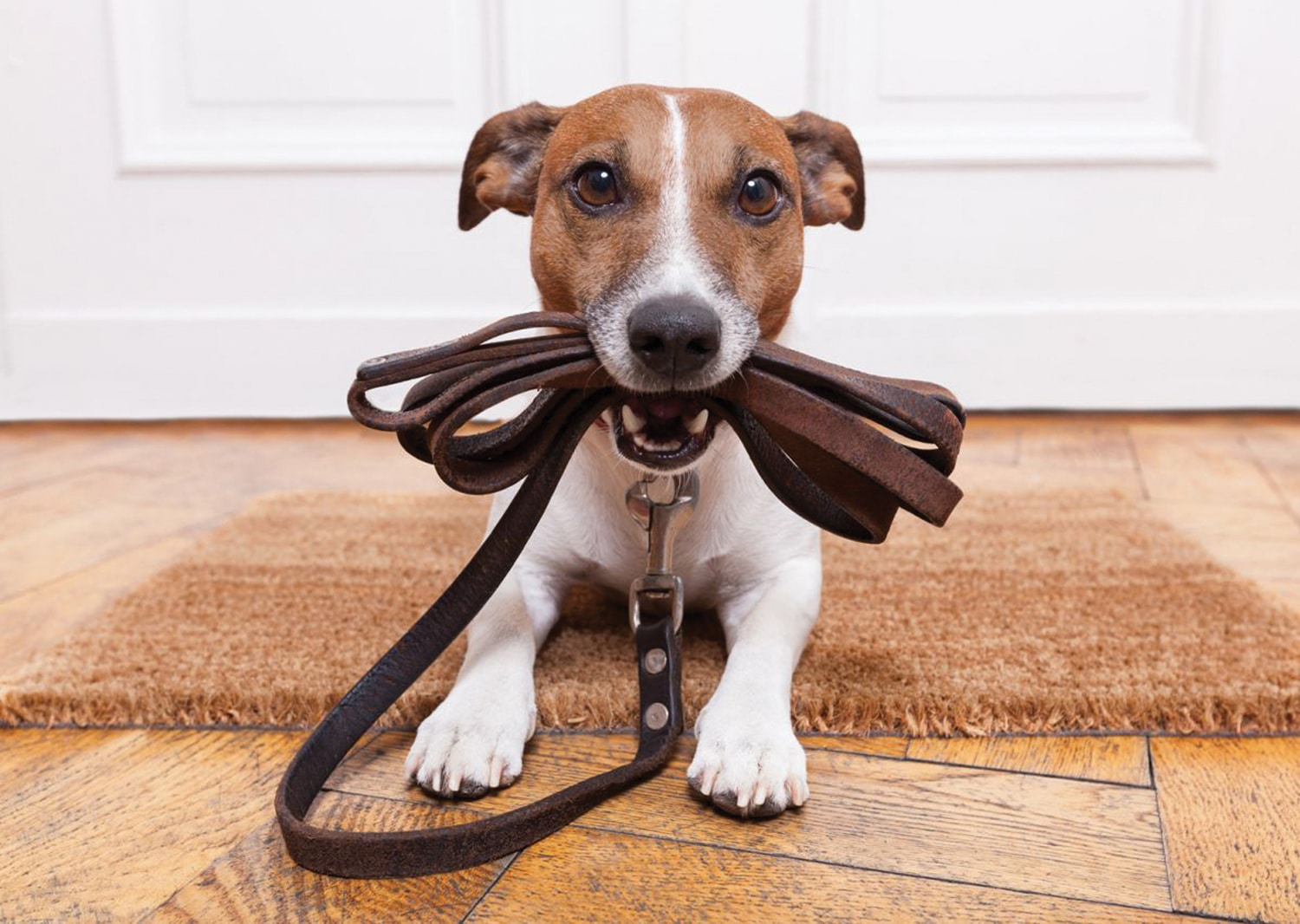 Safe walkies: Keeping adventurous dogs safe when out on walks