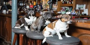 dog-friendly pub