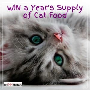 Cat Food Competition