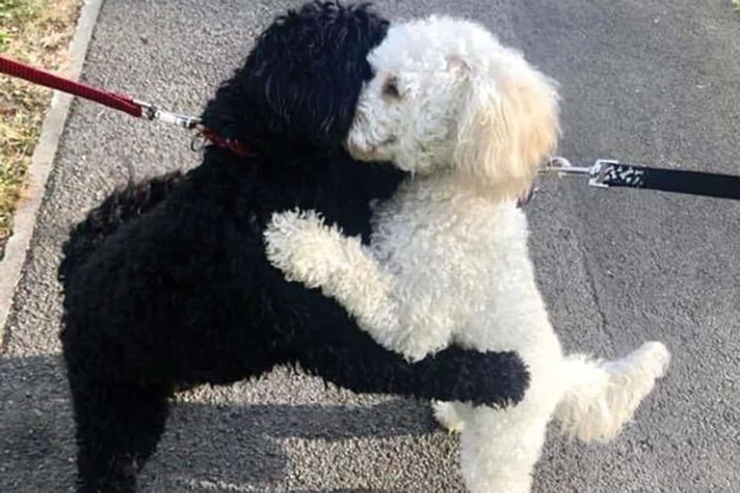 Hugging Dogs