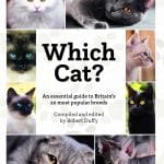 Which Cat