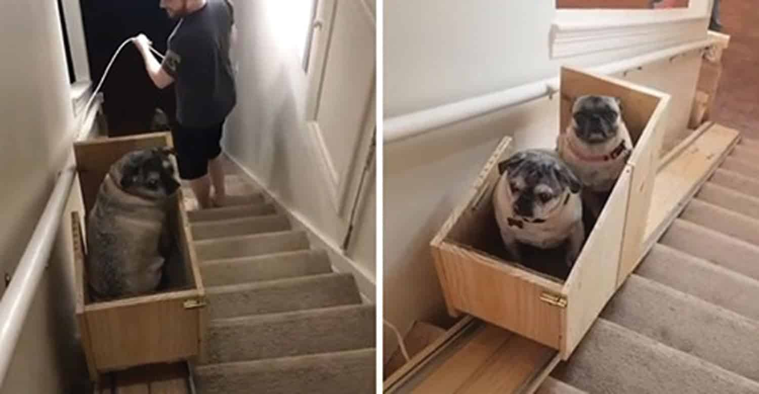 dog stairlift