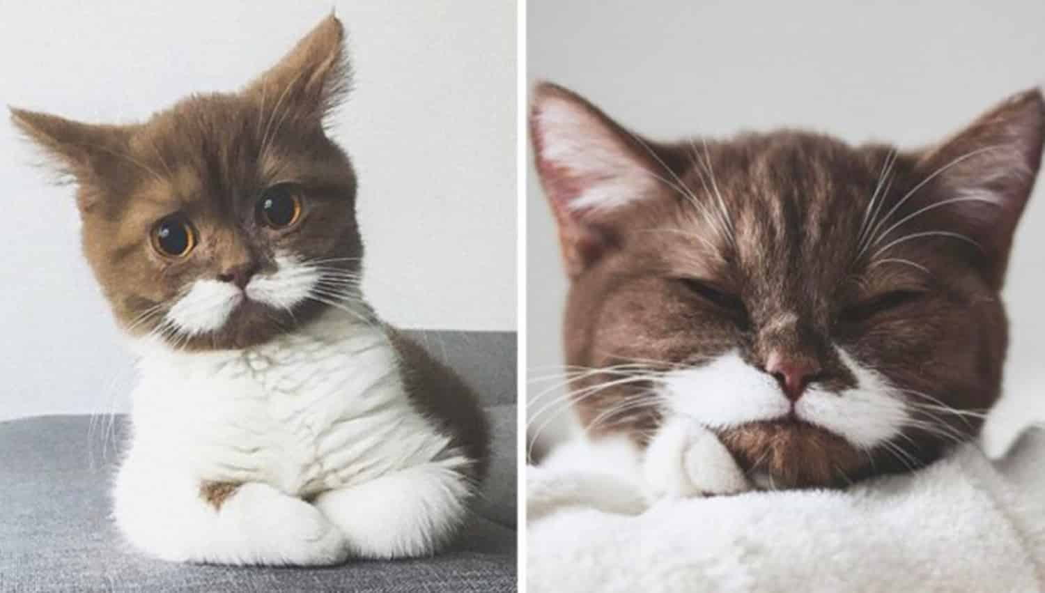 cat with white moustache